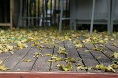 Ciérrese para arriba en caer de las hojas Fotografía de archivo libre de regalías