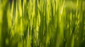 Ciérrese para arriba en hierba borrosa con la luz del sol que alcanza a través Foto de archivo libre de regalías