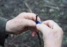 Ciérrese para arriba en las manos del jardinero que injertan árboles frutales en su jardín de la fruta foto de archivo libre de regalías