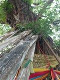 Ciérrese para arriba en motivo budista del baniano imagenes de archivo