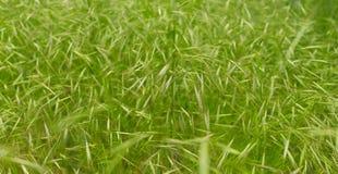 Ciérrese para arriba en textura fresca de la hierba verde Imagen de archivo