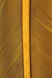Ciérrese para arriba en un feathure del pájaro Imagen de archivo libre de regalías