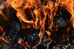 Ciérrese para arriba en un fuego con los conos del pino Fotografía de archivo