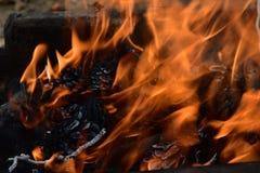 Ciérrese para arriba en un fuego con los conos del pino Imagen de archivo libre de regalías