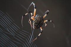 Ciérrese para arriba en web que teje de la araña Fotos de archivo