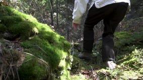 Ciérrese para arriba para un hombre que camina a través del bosque y de las piedras grandes cubiertos con el musgo cantidad Vista almacen de metraje de vídeo