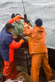 ciência Biologia do mar Remova a garra de Petersen (demonstrador inferior) das profundidades de Paci Foto de Stock Royalty Free