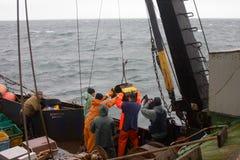 ciência Biologia do mar Remova a garra de Petersen (demonstrador inferior) das profundidades do Pac Foto de Stock