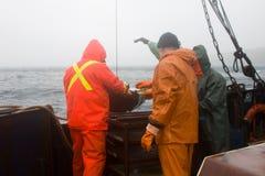 ciência Biologia do mar Remova a garra de Petersen (demonstrador inferior) das profundidades do Pac Imagens de Stock Royalty Free