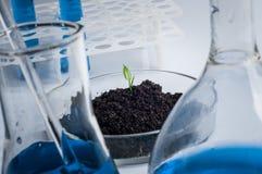 Ciência, biologia, ecologia, pesquisa e conceito dos povos - próximo acima do cientista entrega guardar o prato de petri com a am fotografia de stock royalty free
