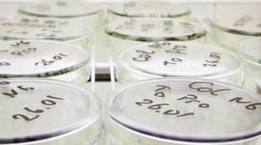 Ciência da microbiologia imagem de stock