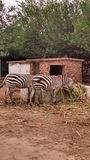 Ciò è animale fotografia stock libera da diritti