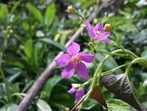 Ciò è bei fiori Fotografia Stock Libera da Diritti