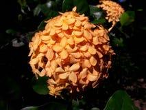 Ciò è bello fiore Immagini Stock