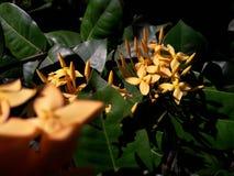 Ciò è bello fiore Fotografie Stock