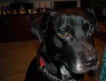 Ciò è il mio cane affumicato Immagini Stock