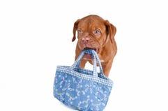 Ciò è il mio sacchetto! Fotografia Stock