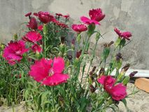 Ciò è immagini di un fiore Fotografia Stock Libera da Diritti