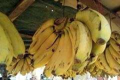 Ciò è l'immagine dei frutti gialli della banana che sta appendendo nel mazzo fotografia stock libera da diritti