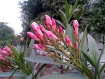Ciò è l'immagine di molti piccoli germogli di fiore rossi con le foglie verdi fotografia stock libera da diritti