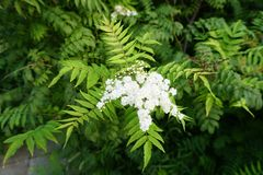 Ciò è un fiore nel parco fotografie stock