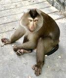 Ciò è un genere di scimmia nel Vietnam fotografia stock