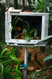 Programma della pianta Fotografia Stock Libera da Diritti