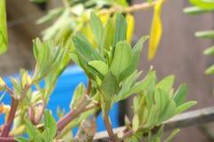 Ciò è una pianta di spinaci immagine stock