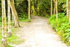 Ciò è una strada rurale fotografia stock libera da diritti