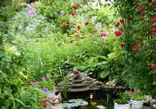 Ciò è una vista vicina della caratteristica dello stagno con la statua Belle rose rosse immagine stock