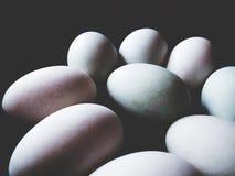 Ciò è uovo dell'anatra nel fondo nero, il tono morbido immagine stock