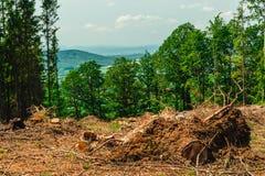 Ciąć w dół drzewa w górach Fotografia Royalty Free