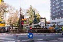 Ciąć wielkiego drzewa w mieście Obraz Royalty Free