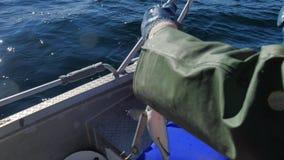 Ciągnąć Coalfish Łowi złapanego na dalekomorskim połowie i ciągnięciu od wody Ostatnia walka zwierzę Denny sporta połowu cl zbiory