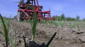 Ciągnik kultywuje ziemię zasadzającą z cebulami zdjęcie wideo