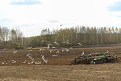Ciągnik orze pole w wiośnie Obrazy Stock