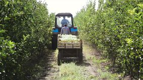 Ciągnika przewieziony drewniany zbiornik pełno jabłczane owoc zbiory