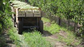 Ciągnika przewieziony drewniany zbiornik pełno jabłczane owoc zdjęcie wideo