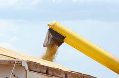 Ciągnikowe dolewanie soje na ciężarówce Zdjęcia Stock