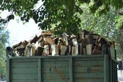 Ciężarówka drewno pełno jest pod drzewem zdjęcie stock