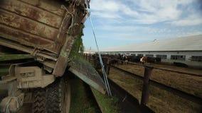 Ciężarówka nalewa alfalfa od ciała zbiory