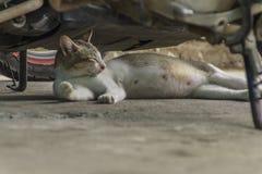 Ciężarny żeński kot odpoczywa pod motocyklem zdjęcia stock
