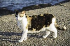 Ciężarny kot blisko do morza Obraz Stock