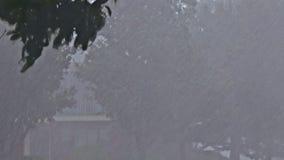 Ciężka burza z deszczu wiatru drzewami w monsunu opady deszczu zbiory wideo
