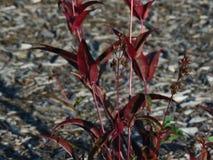 Ciężka cień roślina zdjęcia stock