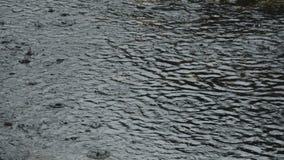 Ciężka deszcz kropla i robi wylew na cement ziemi w parku zdjęcie wideo