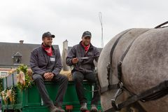 Ciężka koń parada Lennik Zdjęcia Royalty Free