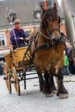 Ciężka koń parada Lennik Fotografia Royalty Free