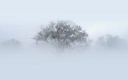 Ciężka mgła i drzewa Zdjęcia Royalty Free