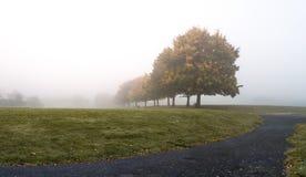 Ciężka zwarta mgła przy parkiem Obrazy Royalty Free